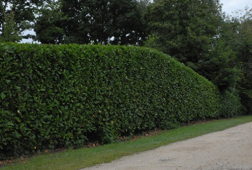 Parcs et jardins de sologne conception paysag re for Entretien espace vert auto entrepreneur